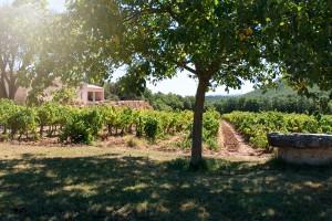 chateau-saint-baillon-9
